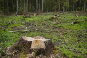trees cut down           The Talk about Climate Change